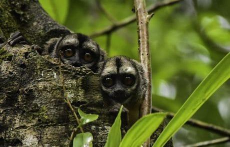 Fauna en Muyuna Amazon Lodge - Vive la experiencia de la Selva Iquitos Perú