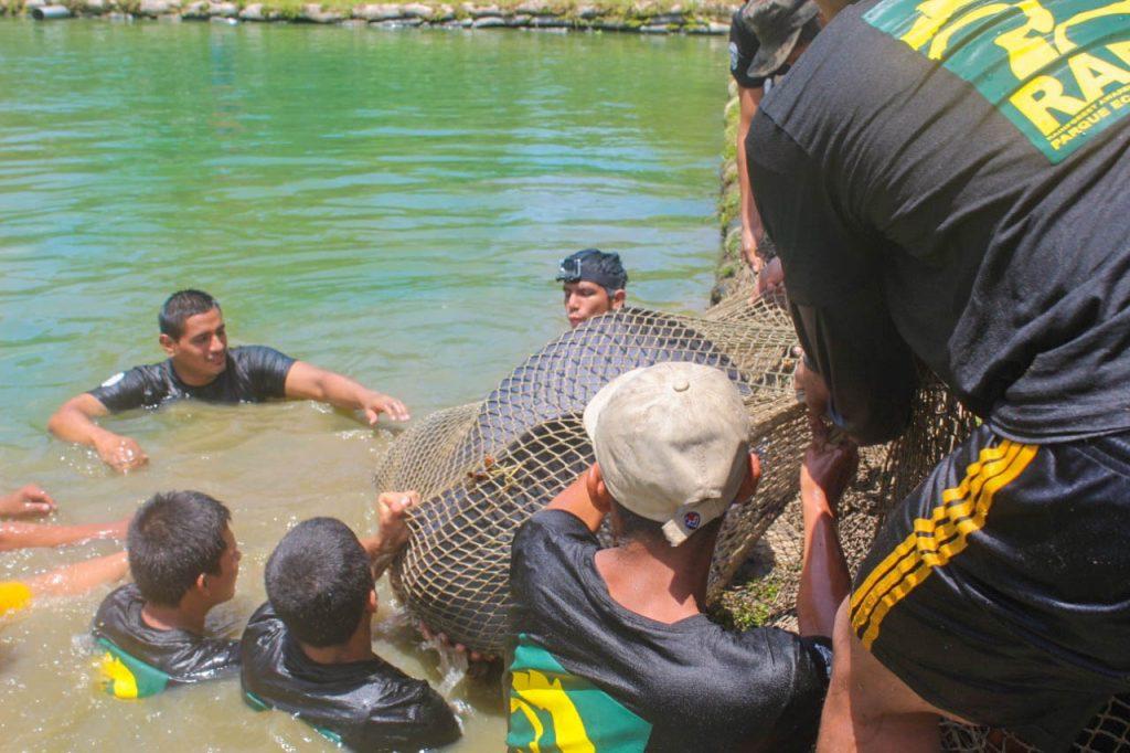 Manatee Liberation at Yanayacu River